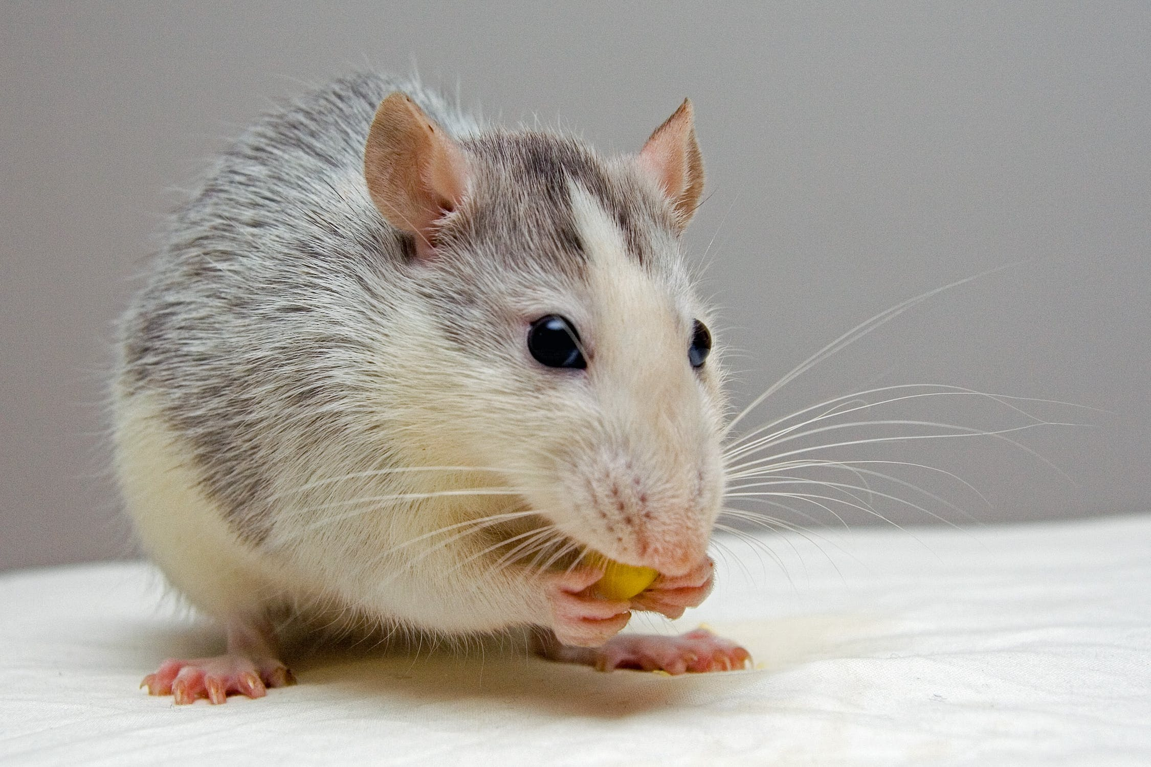 mouse with nut